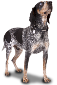 Collar Clinic E Collars For Dog Training Gps Dog